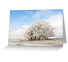 Frosted Copse Greeting Card