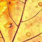 Anatomy of a Leaf by Kadwell