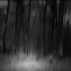 THE FOREST OF LOST SOULS by leonie7