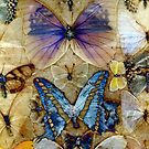 Antique Butterfly Enhanced Collection  by himmstudios
