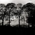 The Ochil Hills by 242Digital