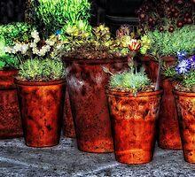 Alpines and Terracotta Pots by Karen  Betts