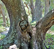 Spooky Face In A Tree by Cynthia48