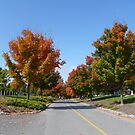 Autumn Road by Vicki Spindler (VHS Photography)