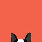 Boston Terrier Peek - Black on Coral by AnneWasHere