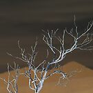 Barren Branches by Donuts