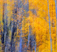 Autumn by Laurie Minor