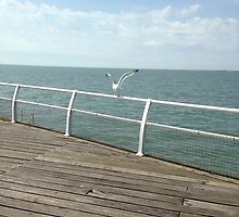 Fly Seagull Fly by ELVSmith03