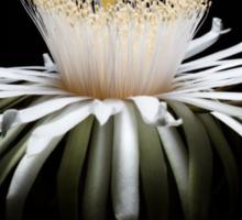 Solar Crown Bloom Sticker