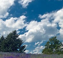Lavender Hill by sundawg7