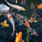 Koi by Bob Wall