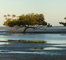 Clairview Mangroves  Panorama  by Virginia  McGowan