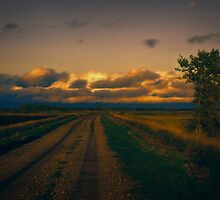 It's A Long Road Home by Dorothy  Pinder