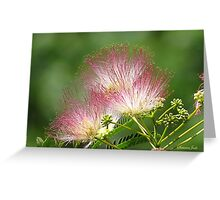 Mimosa ~  An Exotic Flowering Tree Greeting Card