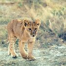 Youngster! by Lyn Darlington