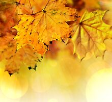 Fall maple leaves 2 by AnnArtshock