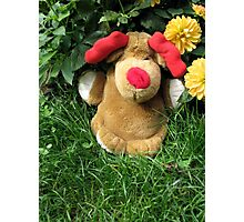 Pooch (our doorstop) in Our Garden in Romania Photographic Print