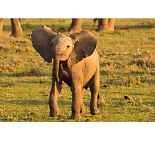 Cheeky Elephant Photographic Print