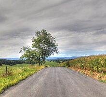 Tree On A Country Road by James Brotherton