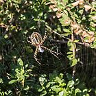 Welcome to My Web by Dwellsphoto