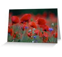 Views: 7235. I just pity year and beautiful dancing poppy flowers.   A mnie jet szkoda lata. Andre Brown Sugar This image Has Been S O L D .  Fav 41 .  Buy what you like! Thx! Greeting Card