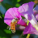 Bees,Flowers,Water! by jozi1