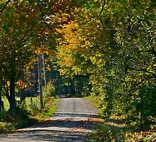 A quiet country road by Carolyn Clark