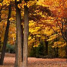 Autumn in Ontario by indiabluephotos