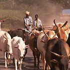 Herding the cattle by indiafrank