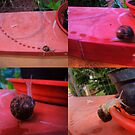 """the speed of snail by Antonello Incagnone """"incant"""""""