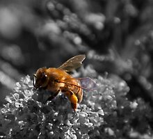 Busy Bee by Suzanne Dwyer