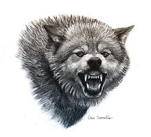 Wolf Smile by Gaia Sorrentino