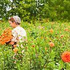 Dahlia Harvest by Marilyn Cornwell