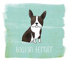 Boston Terrier by 52dogs