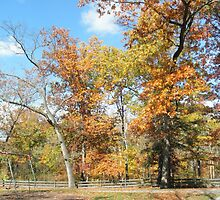 Bedford Reservation 001 by BarbBarcikKeith