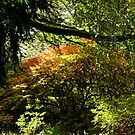 Beautiful Trees at Escot, Devon UK by lynn carter