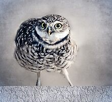 Burrowing Owl by LudaNayvelt