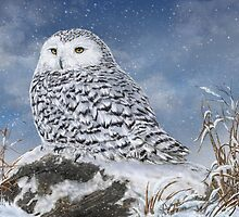 WINTER APPROACH - SNOWY OWL by Martin Wilneff