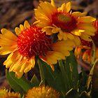 End of season blooms....Colorado Springs by dfrahm
