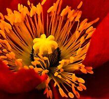 Red Flame by LudaNayvelt