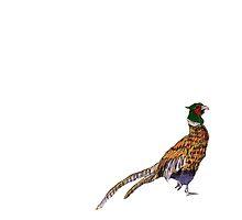 Pleasant Pheasant by Xantippe