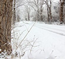 Snowy Country Road by Christa Binder