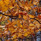 Rustling Leaves      ^ by ctheworld