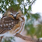 Sleepy Time by Owl-Images