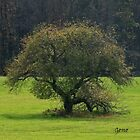 Lone Apple Tree In The Meadow by Geno Rugh