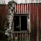 15.10.2014: Dead Birch, Fungus and Abandoned House by Petri Volanen