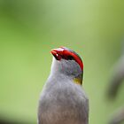 Red-browed Finch by aussiebushstick