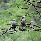Two Wet Kookaburras by aussiebushstick