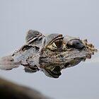 Caiman  - Alligator  - Napo River by john  Lenagan