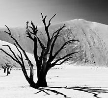 Dead Vlei with dead trees in desert landscape of Namib BW 01 by travel4pictures